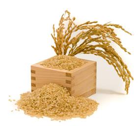 sunwarrior protein singapore b rice