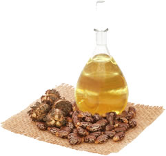 castor-oil-and-seeds