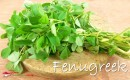 Fenugreek Singapore
