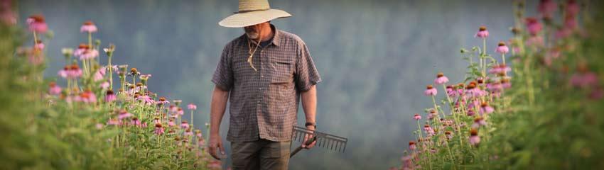 natural factors singapore farms 2